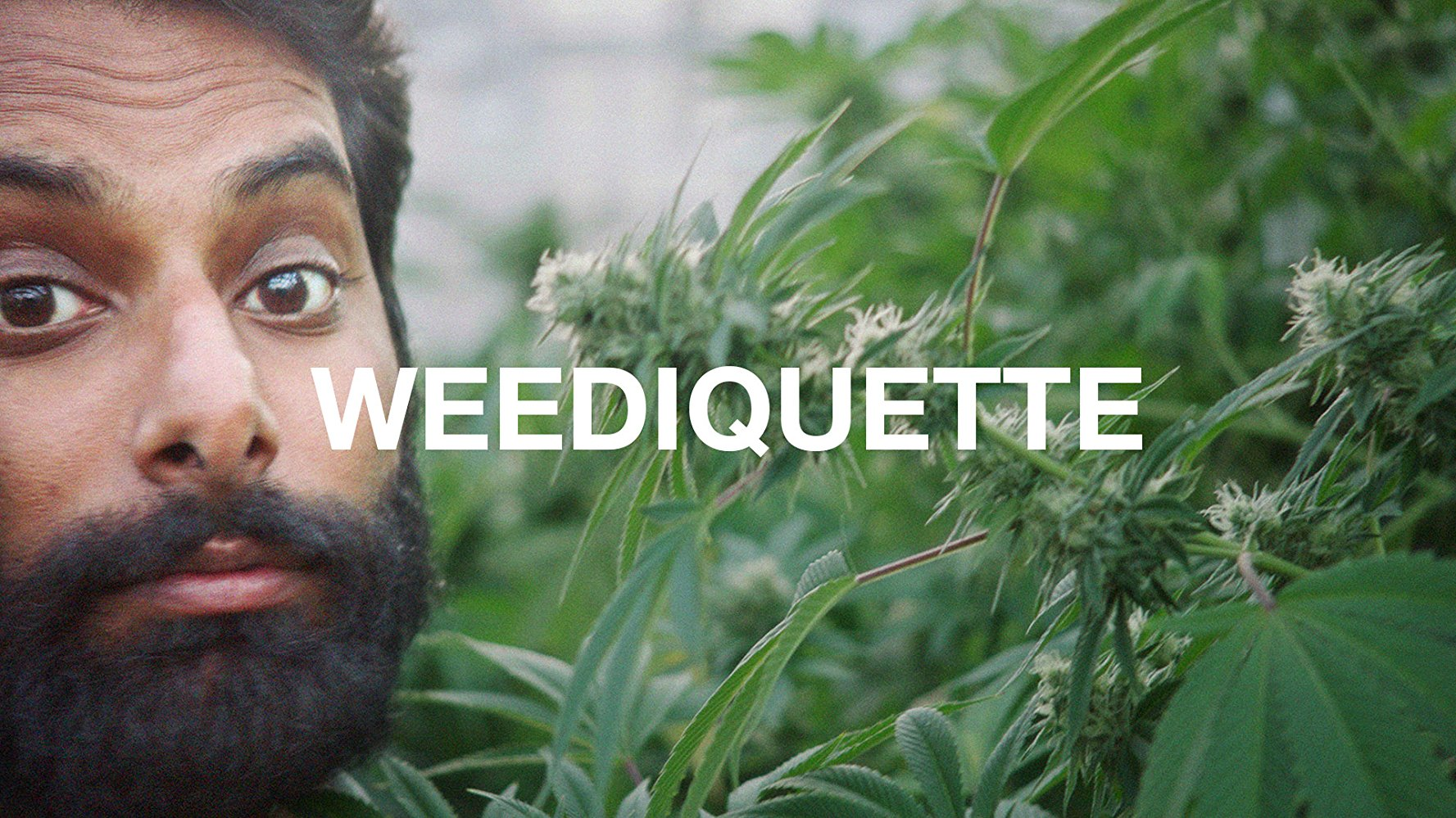 Weediquette - Season 3