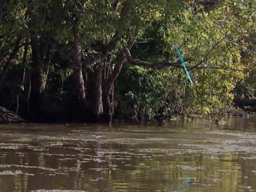 Swamp People - Season 9